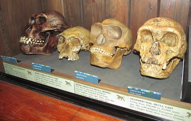Skulls in Grant Museum