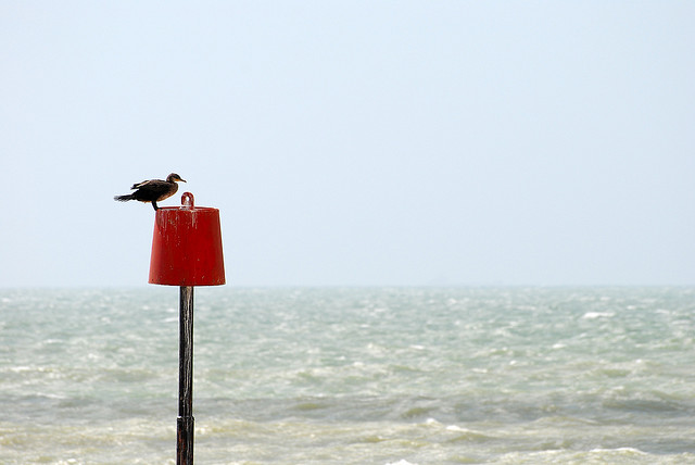 Sandgate Beach Wildlife