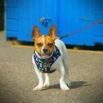 St. Mildreds Bay Beach Dog
