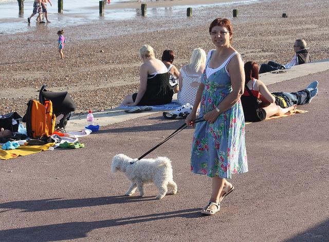 Dog at Dymchurch Beach
