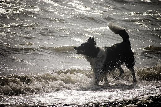 Dog at Weston Beach